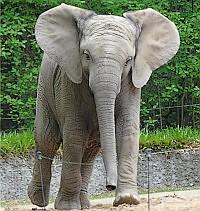 Die elefanten sind los die schülerinnen und schüler der kindergruppe